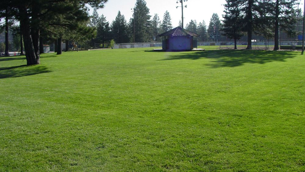 Chief Truckee Lawn